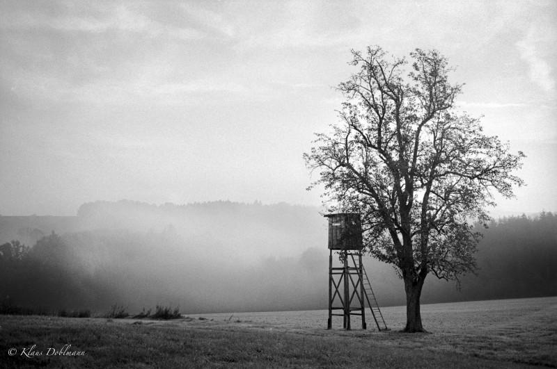 Der Baum, der aus dem Nebel kam