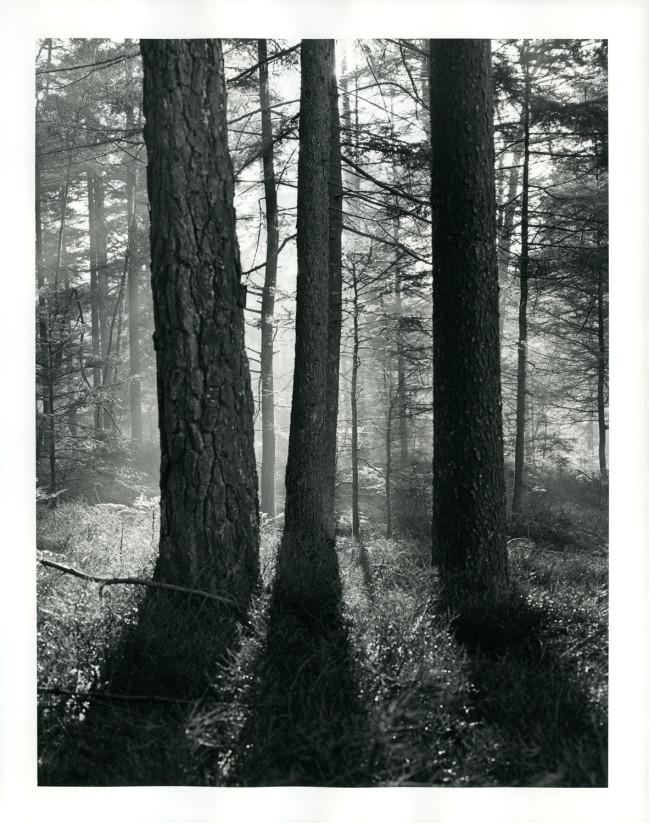 Drei Bäume im Gegenlicht mit Sonne und Nebel. Zur Verstärkung nachgetont in Selentoner.