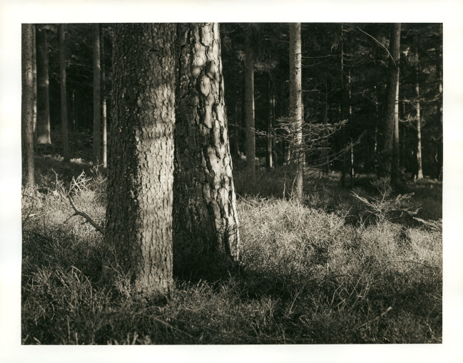 Später Nachmittag im Wald. Die tiefstehende Sonne beleuchtete den bewachsenen Boden und zwei eng aneinander gewachsene Baumstämme. Lichter leicht angebleicht und mit Siena getont um den warmen Eindruck vor Ort wiederzugeben.