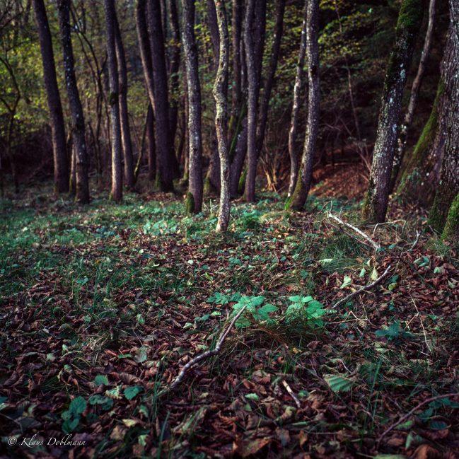 Herbstwald #1